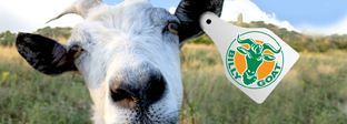 Goat Notes